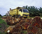 WWF will assess the worlds major users of palm oil over the next six months and publish a Palm Oil Buyers Scorecard. 