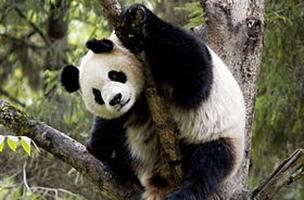 / ©: WWF-Canon / Bernard DE WETTER