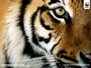  / &copy;: National Geographic Stock / Michael Nicols / WWF