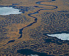 Permafrost tundra, Kolyma delta, Siberia, Russia.