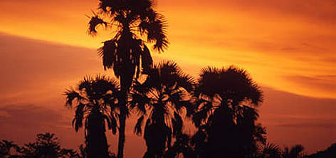 Petit Loango National Park Sunset with silhouette of palm trees near Setté Cama, Gabon. rel=