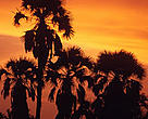 Petit Loango National Park Sunset with silhouette of palm trees near Setté Cama, Gabon.