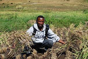 Randriamanantsoa Philbert in his SRI field.