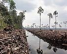 Peat draining and large-scale clearance of natural forest by APP wood supplier PT. Ruas Utama Jaya inside APPs Senepis Tiger Sanctuary in June and October 2011