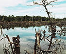 Destroyed mangrove forests on Phuket Island, Thailand.