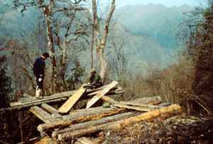 Illegally cut logs left to dry Wolong Nature Reserve, Sichuan province, China. / ©: © WWF-Canon / Stuart CHAPMAN