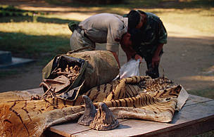 Confiscated rhinoceros horns, tiger skin and bones Chitwan National Park, Nepal. / &copy;: Jim Jabara / WWF-Canon
