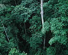 Tropical Rainforest. Western Congo Basin.