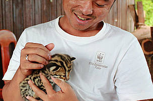 Ranger with rescued leopard cat, Eastern Plains Landscape, Cambodia
