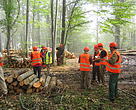 Responsible forest management in Eastern Europe