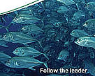 Follow the leader: Learning from experience and best practice in regional fisheries management organizations