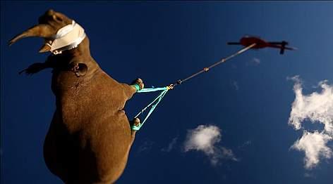 / ©: Michael Raimondo / WWF