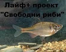 / ©: WWF/ Stoyan Mihov