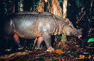 / ©: WWF Greater Mekong Programme