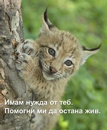 / ©: Георги Хрушчев