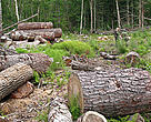 Although there are a few positive examples of successful Russian forest law enforcement actions, the proportion of registered illegal logging violations brought to trial is extremely low