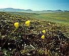 Russia's Arctic tundra is just one ecosystem threatened by climate change.