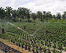 Palm Oil - Per