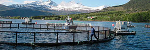 Villa Leppefisk, a salmon farm in Norway on the path to sustainability. / ©: WWF-Canon / Jo BENN