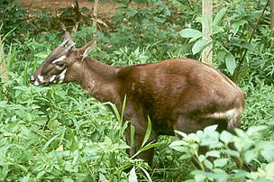 saola is another endangered species in TS Ecoregion