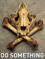 Tiger (Panthera tigris) skull and bones taken from illegal trade, India / ©: naturepl.com/Vivek Menon / WWF