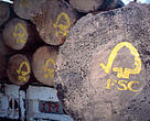 FSC logo painted on sustainable harvested logs.