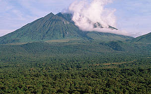 Sabinyo volcano and thick forest, habitat of the endangered mountain gorilla Virunga National Park, ... / &copy;: Martin Harvey / WWF-Canon