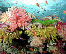The Coral Triangle is one of the most biologically-rich marine regions in the world