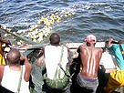 Local fishermen hauling in the nets, Senegal. / ©: WWF-Canon / Olivier van Bogaert