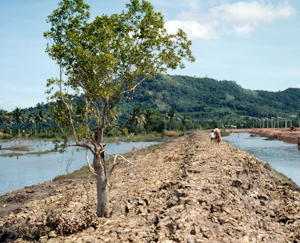 Mangrove destruction for shrimp farming in Thailand. / ©: WWF-Canon / Hartmut JUNGIUS