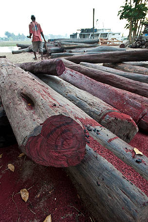 Rosewood Trees Need Greater Protection Wwf