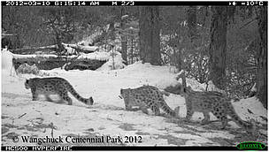 Snow Leopards cited at WCP