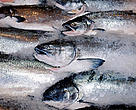 Japan is the world's largest importer of salmon, and imports around half its frozen sockeye supplies directly from Russia.