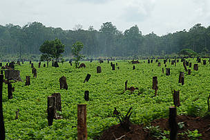 Soy farm in the Dry Forests is decreasing forest land. / ©: WWF/ Nick Cox