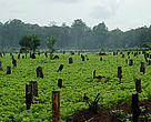 Soy farm in the Dry Forests is decreasing forest land.