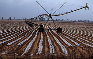 Irrigation of a strawberry field in Spain - an example of the subsidy programme undermining ... / &copy;: WWF-Canon / Michel GUNTHER