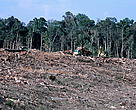 Sumatra's forests - logged for the paper industry and cleared for Palm oil plantation.