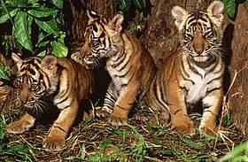 / ©: WWF-Canon / Alain Compost