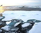 Ice floes with considerable open water near the edge of the sea ice. Taken near the 2012 record minimum low sea ice extent north of Svalbard, Norway.