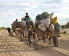 Charcoal transport near Toliara, Southwest Madagascar