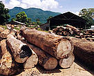 The TRAFFIC report  documents alarming levels of illegal logging and exports of forest products from Tanzania. Sawmill, Udzungwa Mountains, Tanzania.