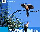 WWFolio Bolivia 18