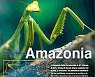 Hoja informativa Programa Amazonia, WWF Bolivia