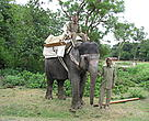 Tara with her mahout as she trains for jungle patrol duties