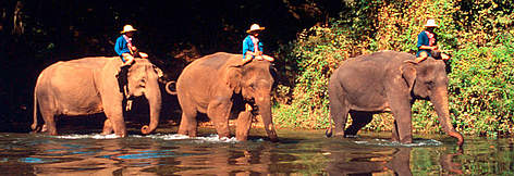 Indian elephants (Elephas maximus bengalensis) carrying their trainers across a river at the Thai ... / ©: WWF-Canon / Martin HARVEY