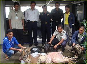 Mr. Anusit Kanjanapol (standing, centre) leads the Royal Thai Customs Officers team who confiscated ... / &copy;: PeunPa Foundation