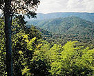 Landscape of mixed deciduous forest in Huai Kha Khaeng Sanctuary in West Thailand.