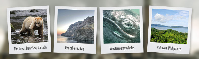 Icons threatened by fossil fuels  / ©: WWF Multiple Credits