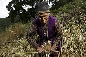 Sustainable Livelihood- Langtang region