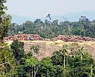 Large trees being stacked in Jambi Province after then APP supplier PT.